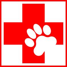 Dog Trainer Georgia